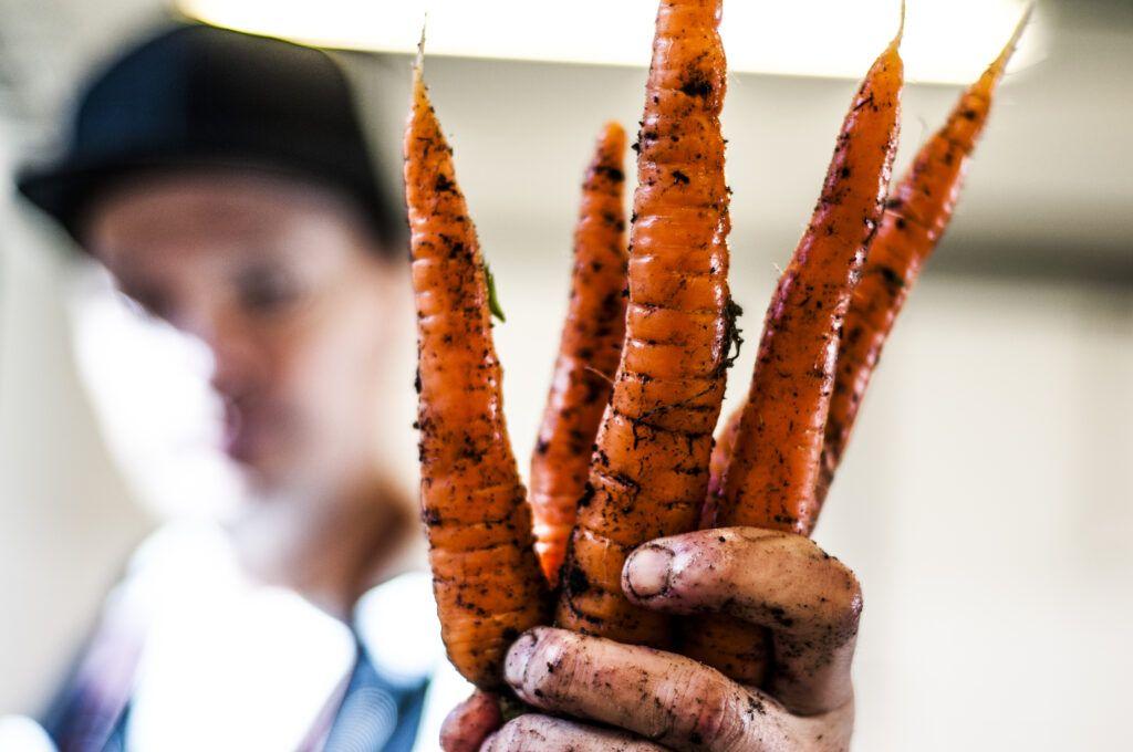 Sorrin porkkanat