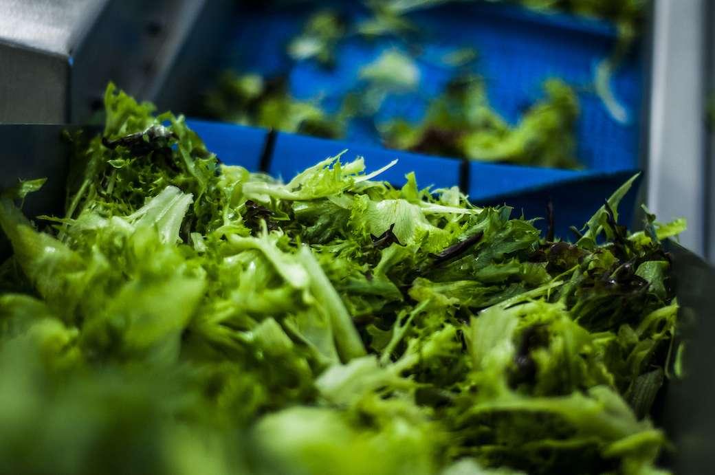 Salaattia hihnalla